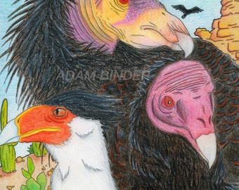 "North American Vultures PRINT 8.5""x11"""