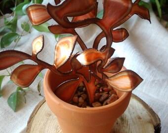 Succulent/Golden Teardrop Copper
