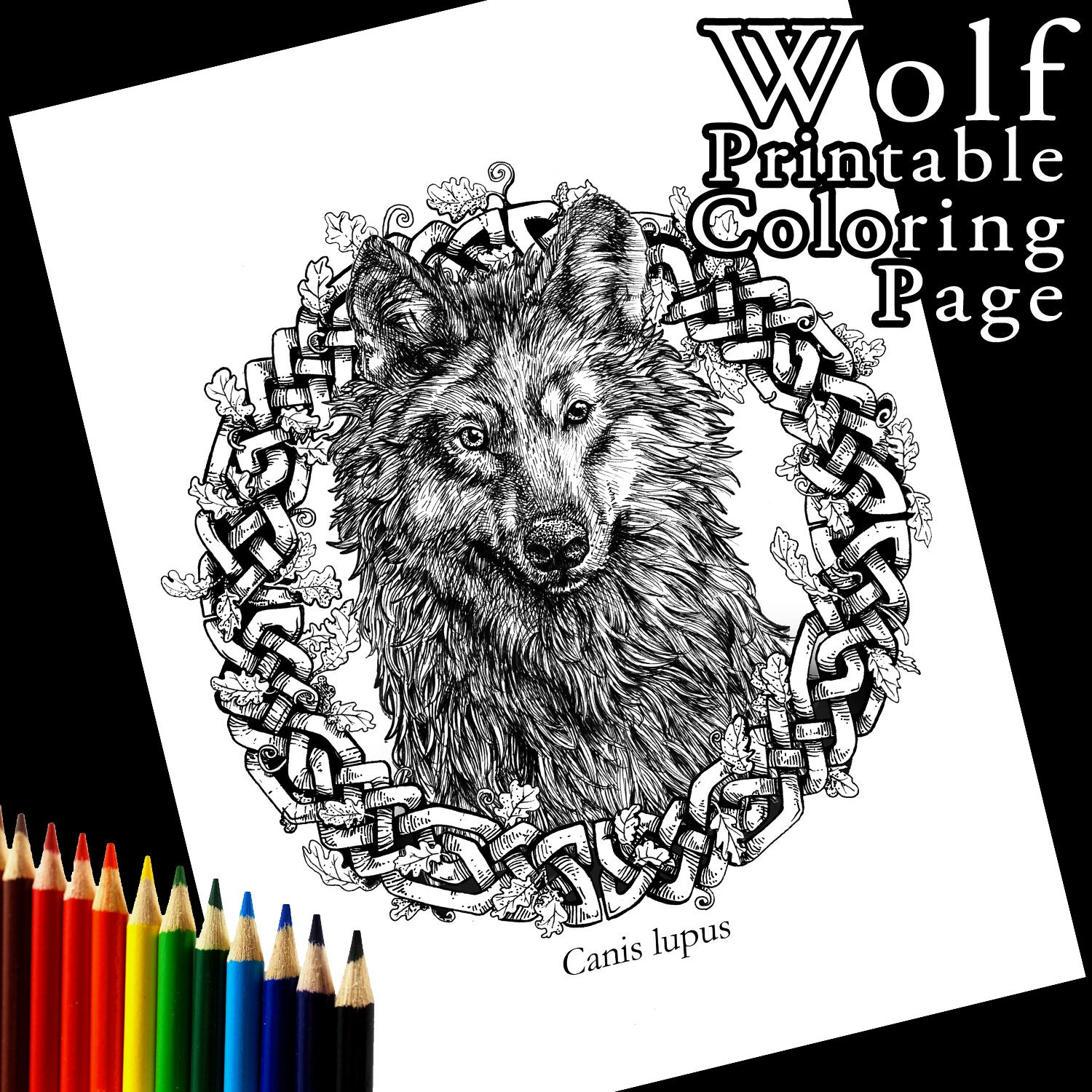 Grey Wolf Printable Coloring Page Celtic Knot Realistic