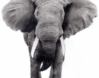 Elephant 8x10 print charcoal picture black and white art Elephant wall art Elephant art print Elephant picture Elephant drawing