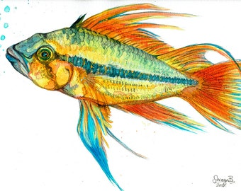 S American Cichlid