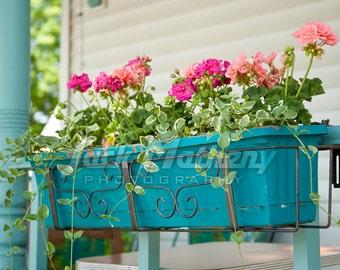 Pink Geranium Photo Digital Download