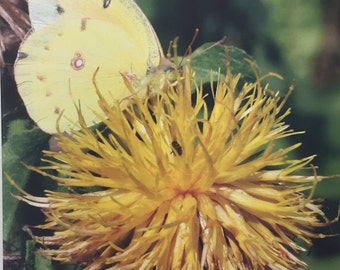 Yellow Butterfly on a Flower