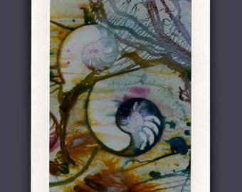 Shells No. 3 -  Beautiful Nautilus Shell Blank Photo Greeting Card by Kathy Morton Stanion EBSQ