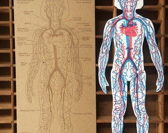 letterpress Circulatory system articulated figure