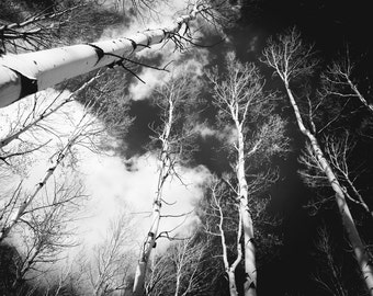 Aspen Trees Snow BW Aspens Snowy Colorado Black/White Snowfall Forest Rustic Cabin Lodge Photograph