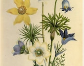 Jane Loudon Yellow Blue White flower Book Plate SALE~~Buy 3, get 1 free
