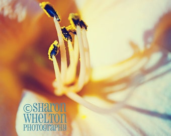 Dreamy Pastel Daylily - Macro Nature Photography - Spring Decor - Mother's Day Gift - Pink Yellow Blue Baby's Room Nursery Print