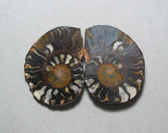 fossil pyritized AMMONITE cabochons matching pair two 34X46mm designer cabs