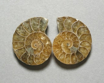 fossil AMMONITE cabochons matching pair two 25X31mm designer cabs