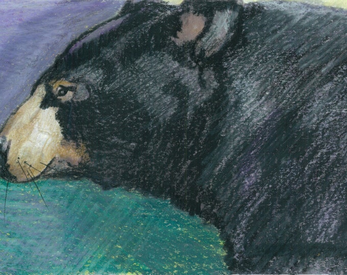 I Like Picnics Too- Original Portrait of a Black Bear- Prints and Cards