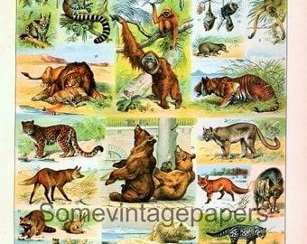"Animals, Mammals n1 digital file vintage encyclopedia 9x12"" instant download"
