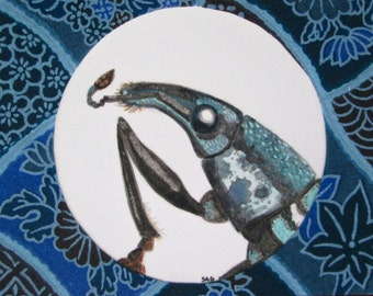 ACEO Weevil - Archival Print Insect Art