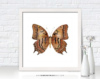 Brown Butterfly Painting, Butterfly Wall Art, Butterfly Print, Original Butterfly Watercolor, Butterfly Greeting Cards, 62 Galaxia Butterfly