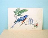 Vintage Blue Bird Postcard Mother and Babies Phyllis Howard Spring Ephemera