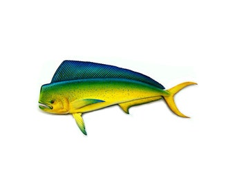 Mahi Mahi art sculpture, 45'' wood carving, wood fish sculpture, sportfishing art, saltwater fish art, fishing art, fishing gift, Dorado art