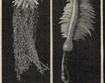 Antique Print 1912 Sea Animals slug coral jellyfish polyps lithograph original antique sea life ocean print