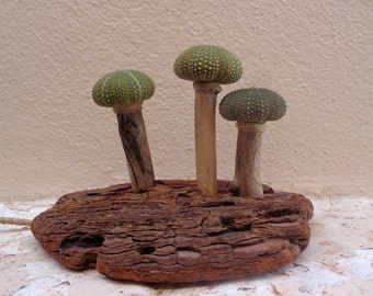Mushroom Lights, sea urchins, light fixture, driftwood sculpture, natural lighting, found objects, upcycled, green, night light, USB, Greece