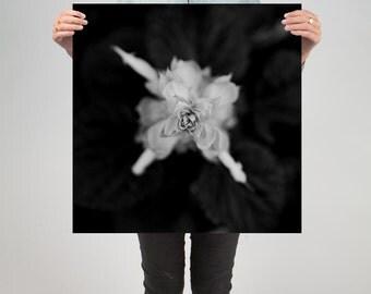 "Floral 4 ( 24"" X 24"" Print )"