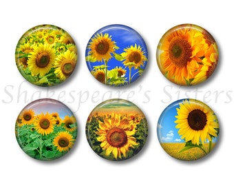 Sunflower Magnets - Fridge Magnets - Flower Art - 6 Magnets - 1.5 Inch Magnets - Kitchen Magnets