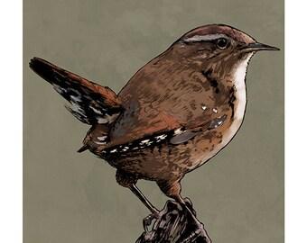 Wren colour art print
