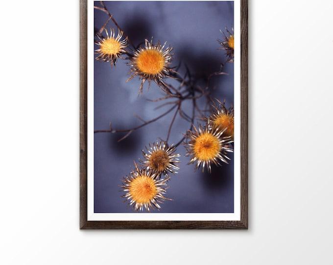 Field flowers Flowers photo Flower photography Flower print Yellow flower photo Botanical art print Floral print Floral wall art Wildflower