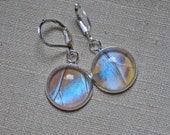 Real Butterfly Wing Earrings. Pearl Morpho Sulkowski. Butterfly Dangle Earrings. Real Blue Morpho Butterfly Wing Jewelry.
