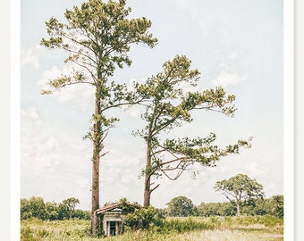Treehugger - Old Shack Photograph - Abandoned House Photo - Rural Georgia Landscape Photography - American South - Rustic Country Decor