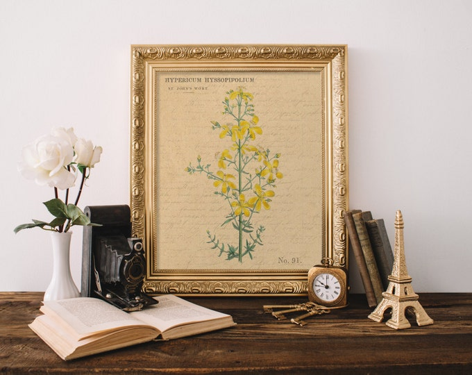 VINTAGE HERBAL PRINT Digital Print St. Johns Wort Print Kitchen Art Print Digital Kitchen Art Print Antique Floral Print Wall Decor