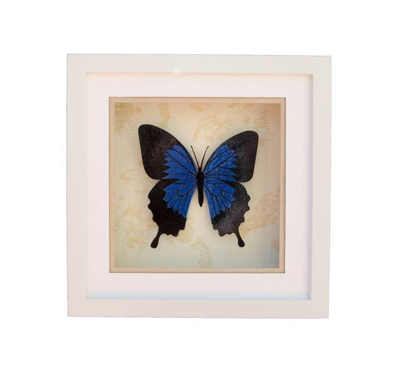 Cobalt Blue Ulysses Butterfly | Stunning Framed Wall Sculpture | Faux Taxidermy Shadow box |  FREE SHIPPING