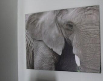 Sadness -  Canvas Photographic Print Of an Elephant