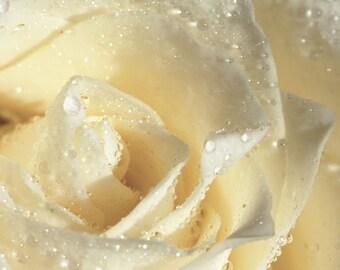 White Rose Perfume Oil