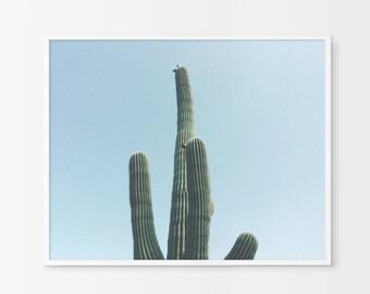 Cactus Photography, Desert Wall Art, Printable Wall Art, Desert Art, Minimalist, Minimal Art, Cactus Art, Cactus, Cactus Wall Art, Desert