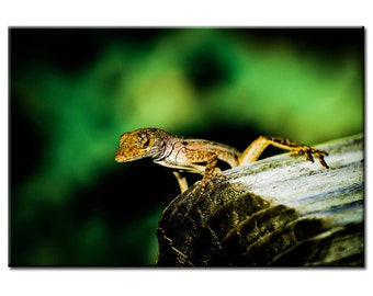 Camouflage - Nature Photography Print