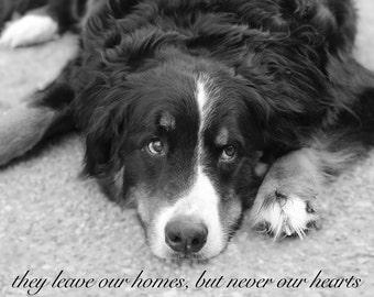 Pet Sympathy Card / Dog Loss Sympathy / Dog Memorial / Dog Remembrance