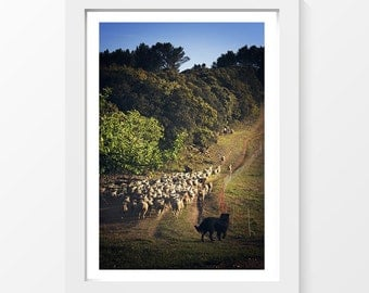 """I am the guardian / Herd sheep dog scrubland photo printable wall art home decor downloadable art to print yourself / A3 and 11"""" x 17"""""""