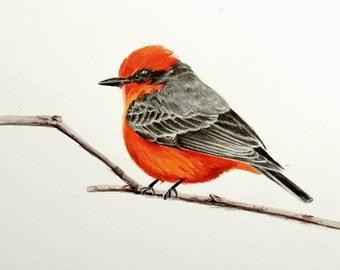 "Vermillion Flycatcher Print | 8x10"" Giclee Print"