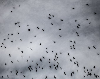 mess of birds in flight