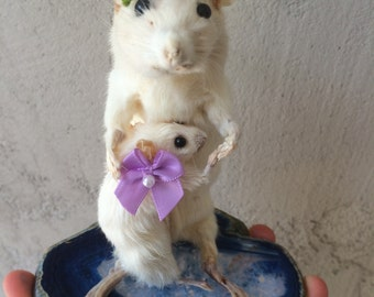 Mom and baby taxidermy