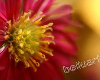 Art photography 01 - fine art photo - macro - flower photography - flower photo - printable kind - instant download - wall decor