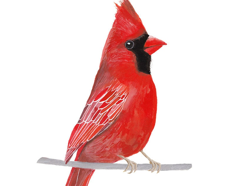 Agile image pertaining to free printable pictures of cardinals
