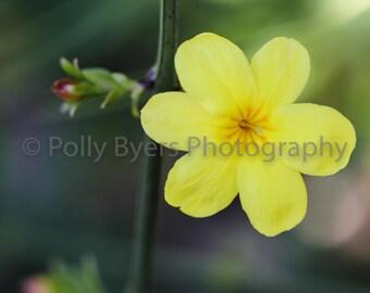 Sunny Nature Fine Art Photography