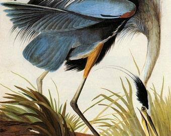 Audubon Great Blue Heron American Bird Fine Art Poster Repro FREE SHIPPING in USA