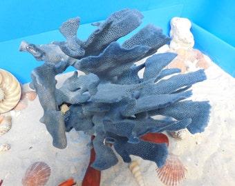 BLUE RIDGE CORAL -Real Coral - Natural Blue Coral - Seashells - Beach Decor - Coastal Decor - Home Decor - Natural Coral - Seashells, Shells