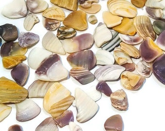 Mini Wampum Shell Pieces(50) -Hand Collected- craft shells, jewelry supplies, bulk shells, beach decor, shell beads, terrarium supplies