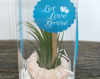 Sea Urchin Tillandsia Favor by Zentilly