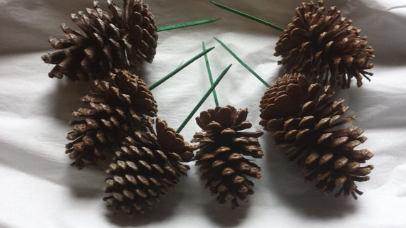 6 large pine cones on picks 46 natural pine cones for Large pine cones