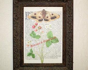 Botanical print, Herbal, Canvas Print, Fragaria rubra, herb, antique print, canvas, herbal poster, floral print, botanical art, #0032