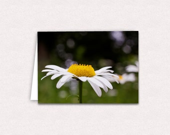Daisy Photo Note Card 5x7 Blank inside Greeting Cards Flower Photography North Carolina Wildflowers Photo Card