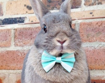 Stripy teal candy bow tie, rabbit bow ties, bunny accessories